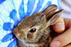 bunny-965819_640
