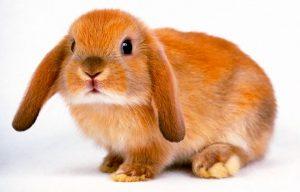 nomi-per-conigli