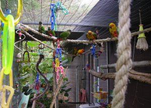 parrotplay